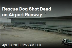 Rescue Dog Shot Dead on Airport Runway