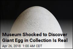 Museum Shocked to Discover Giant Egg in Collection Is Real