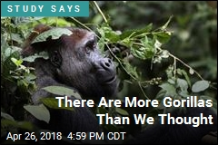 New Study Finds Both Good News and Bad for Gorillas