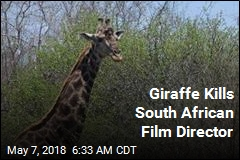 Giraffe Kills South African Film Director
