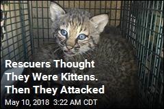 Rescuers Bitten After Mistaking Bobcat for Kittens