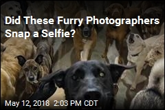 Did These Furry Photographers Snap a Selfie?