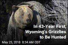 In 43-Year First, Wyoming's Grizzlies to Be Hunted