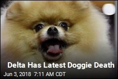 Delta Trying to Figure Out Pomeranian's Death