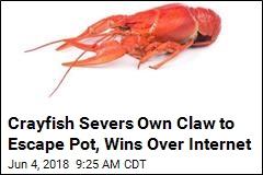 Plucky Crayfish Escapes Pot to Joy of Internet
