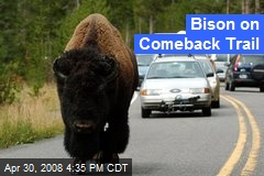 Bison on Comeback Trail
