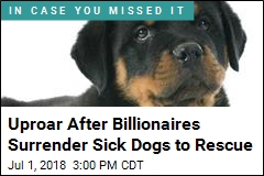 She Took in 7 Sick Dogs, Then Learned of Billionaire Owner