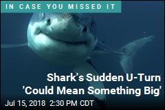 Shark's Carolina U-Turn Intrigues Scientists