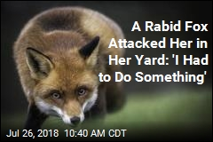 A Rabid Fox Attacked Her in Her Yard: 'I Had to Do Something'
