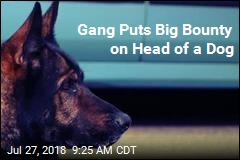 Gang Puts Big Bounty on Head of a Dog