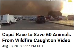 Cops' Race to Save 60 Animals From Wildfire Caught on Video