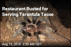 Restaurant Busted for Serving Tarantula Tacos
