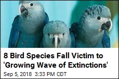 8 Birds Fall Victim to 'Growing Wave of Extinctions'