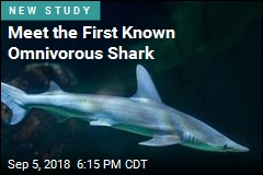 Meet the Shark That Likes Grass More Than Meat