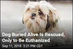 Dog Buried Alive Is Rescued, Only to Be Euthanized