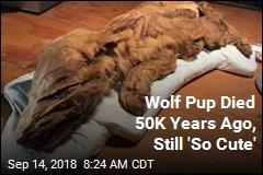 50K-Year-Old Mummified Wolf Pup Still 'So Cute'