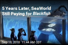5 Years Later, SeaWorld Still Paying for Blackfish