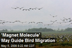 'Magnet Molecule' May Guide Bird Migration