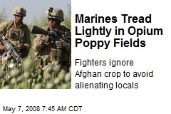 Marines Tread Lightly in Opium Poppy Fields