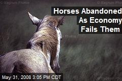 Horses Abandoned As Economy Fails Them