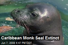 Caribbean Monk Seal Extinct