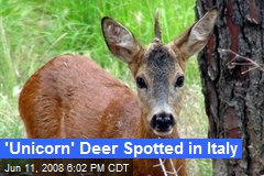 'Unicorn' Deer Spotted in Italy