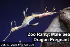 Zoo Rarity: Male Sea Dragon Pregnant