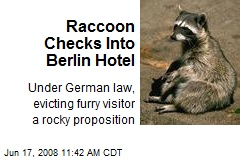 Raccoon Checks Into Berlin Hotel