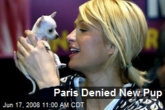 Paris Denied New Pup