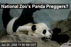 National Zoo's Panda Preggers?