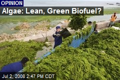 Algae: Lean, Green Biofuel?