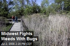 Midwest Fights Weeds With Bugs