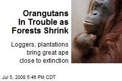 Orangutans In Trouble as Forests Shrink