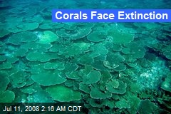 Corals Face Extinction