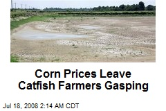 Corn Prices Leave Catfish Farmers Gasping