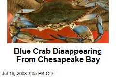 Blue Crab Disappearing From Chesapeake Bay