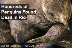 Hundreds of Penguins Found Dead in Rio