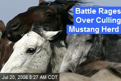 Battle Rages Over Culling Mustang Herd