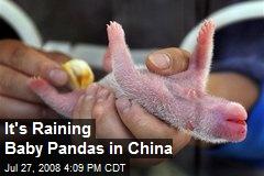 It's Raining Baby Pandas in China