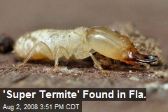 'Super Termite' Found in Fla.