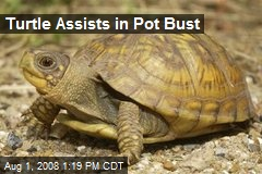Turtle Assists in Pot Bust