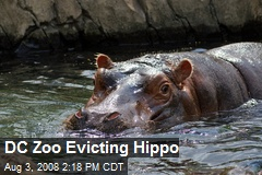 DC Zoo Evicting Hippo