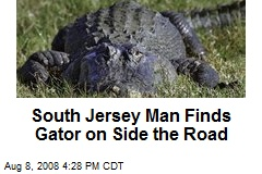 South Jersey Man Finds Gator on Side the Road