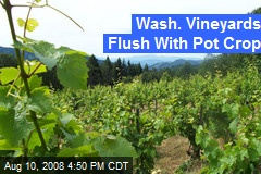 Wash. Vineyards Flush With Pot Crop
