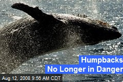 Humpbacks No Longer in Danger
