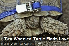 Two-Wheeled Turtle Finds Love