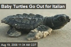 Baby Turtles Go Out for Italian