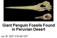 Giant Penguin Fossils Found in Peruvian Desert