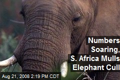 Numbers Soaring, S. Africa Mulls Elephant Cull