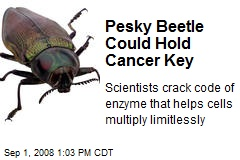 Pesky Beetle Could Hold Cancer Key